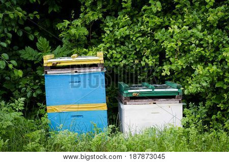 horizontal front view of two beehives by the edge of a green forest