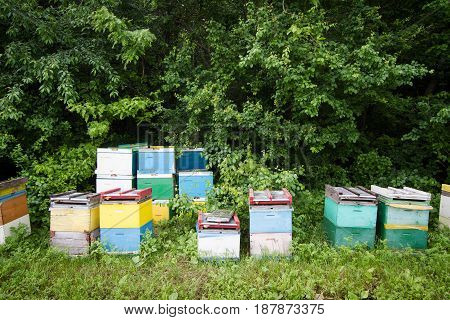 horizontal front view of many beehives by the edge of a green forest