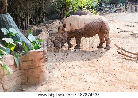 a giant rhino in a zoo horizontal