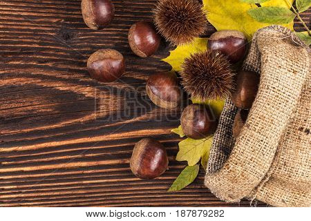 Chestnuts in burlap bag from above on wooden background. Seasonal fall background with copyspace.