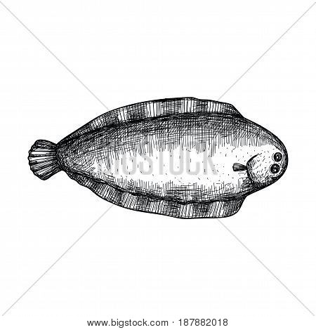 Halibut fish hand drawn icon. Natural fresh seafood sketch, restaurant menu vintage element, healthy food vector illustration isolated on white background.
