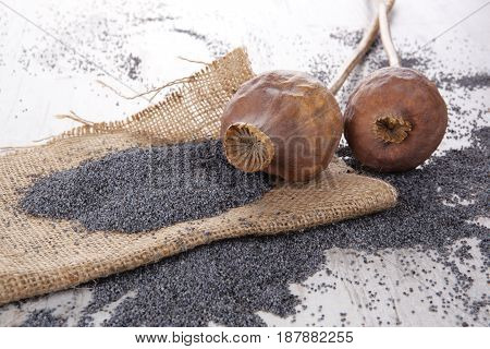 Dry poppy heads and seeds on white wooden background.