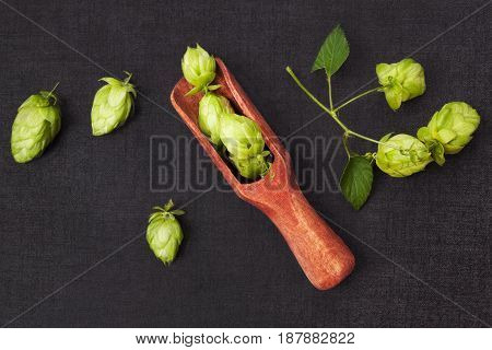 Hop fruit in spoon on dark background from above. Beer drinking background.