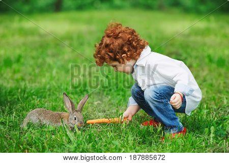 little boy feeding rabbit with carrot in park