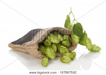 Hop fruit in burlap bag isolated on white background.