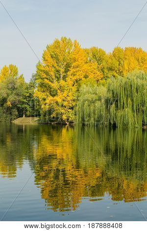 Yellowing trees near a pond in a city Park