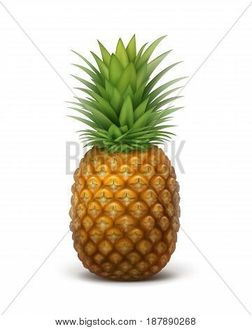 Vector single whole ripe pineapple fruit isolated on white background