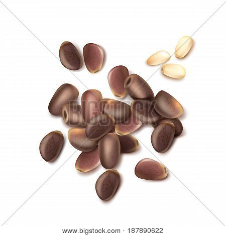 Vector realistic pile of unshelled pine nuts close up top view isolated on white background