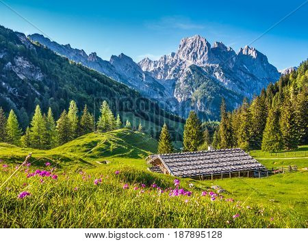 Idyllic landscape in the Alps with traditional mountain chalet and fresh green mountain pastures with blooming flowers at sunset Nationalpark Berchtesgadener Land Bavaria Germany