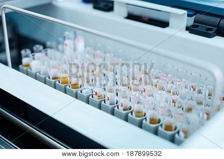 Close it please. Detailed photo of little glasses for blood being in order and waiting for DNA test
