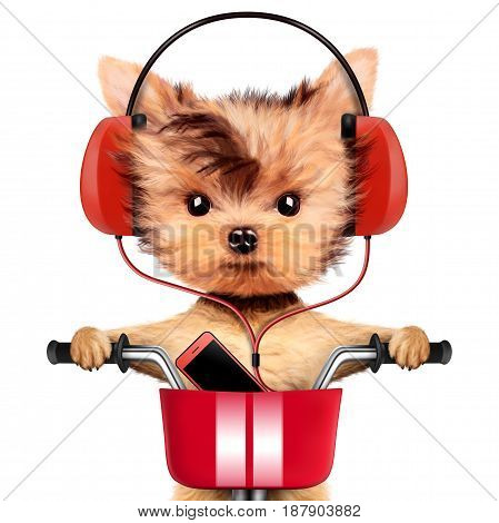 Funny puppy sitting on a bike and wearing headphones, isolated on white. Delivery concept. Realistic 3D illustration of yorkshire terrier