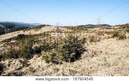 environmental disaster in Jarvoniky mountains in Slovakia - deforested hill due to timberh harvesting