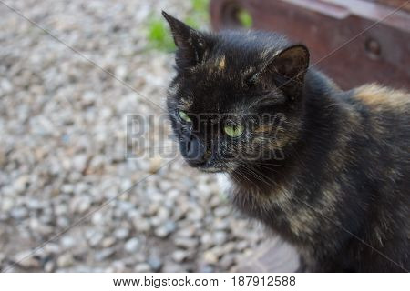 black spotted cat with yellow eyes sitting on the porch among the stones