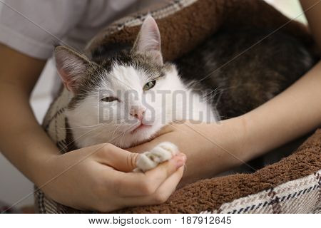 cat in bed with humans stroke hands close up photo