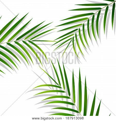 Tropical palm leaves. Palm leaves on white background. Exotic background.