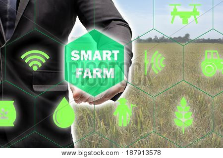 iotInternet of things(agriculture concept)smart farmingindustrial agriculture.Farmer point hand to use augmented reality technology to control monitor and management in the field