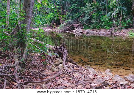 Thai dark tropical forest and rapid mountain river in Mu Koh Chang National Park, Chang island, Thailand. Path to the Khlong Phlu waterfall, tropical red soil with curly roots and dry leaves.