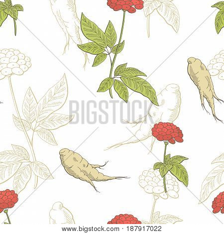 Ginseng graphic color seamless pattern sketch illustration vector