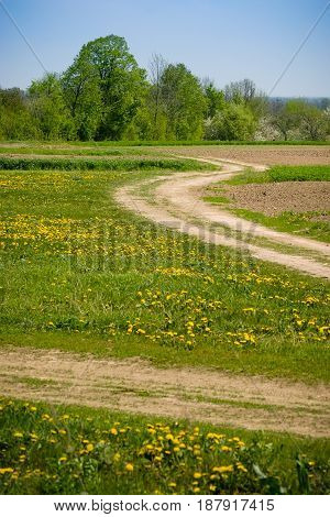 Summer. Rural landscape with a dirt road. Colors green yellow, blue.