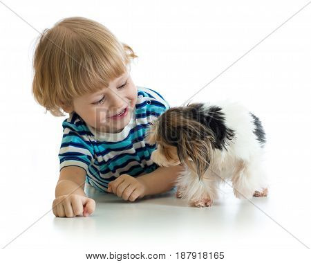 Child little boy and his pet dog play, isolated on white background.
