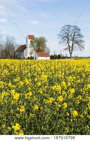 Church behind rape fields at Karlby, near Grenaa, Jutland, Denmark