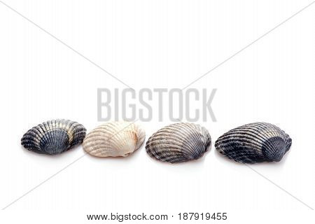 Group of seashells isolated on a white background Space for text