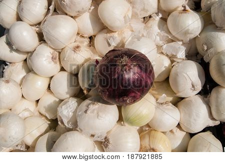 the odd one, one red onion on top of  a flat of white onions on display at a farmers market