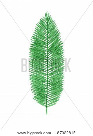 Hand drawn watercolor tropical palm leaf isolated on the white background