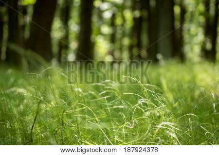 Shot from sunny spring forest with grass trees and blurred background