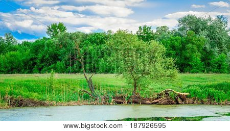 A magical view of nature near the marsh is very beautiful under the blue sky against the background of the green forest
