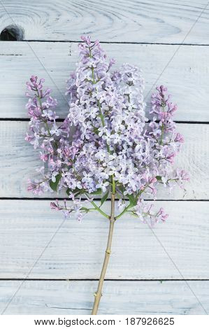 Lilac branch on the white wooden table