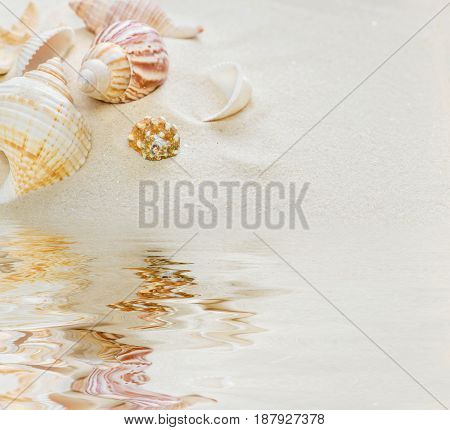 Several clams on the background of sea sand reflected in the water surface with small waves