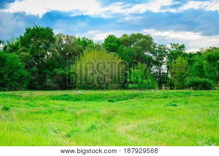 The sun brightly illuminates the green grass on the meadow behind the meadow grow beautiful tall trees under the blue sky with clouds a magical place on the nature of pure and no one around