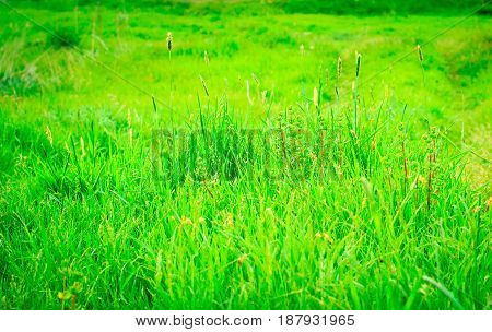 Magic natural background green grass very bright sunlit natural wonders bright day