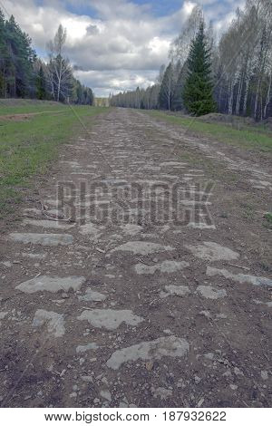 Unpaved Forest Road