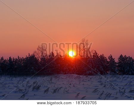 The red disk of the sun rises over the winter forest