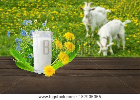 Glass of milk and goats on nature background.