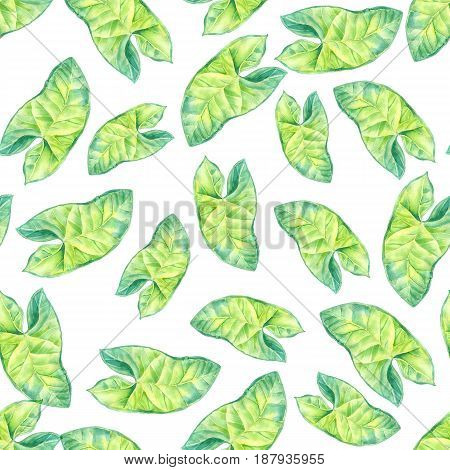 A leaf of a tropical plant. Syngonium aroids is an ampel plant, a liana. Watercolor illustration. Texture for scrapbooking, wrapping paper, textiles, web page, wallpapers, surface design, fashion
