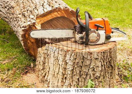 Professional chainsaw is on walnut tree. Gasoline saw on the felled tree