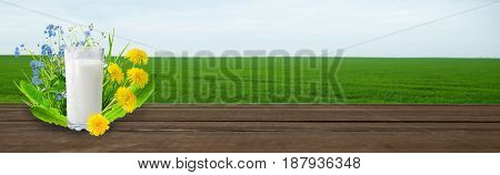 Milk and sunny spring flowers field . Design for you.