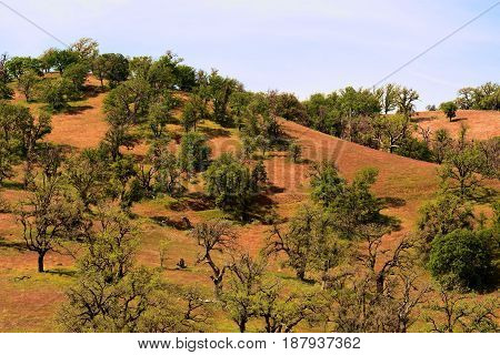 Rolling hills with grasslands and Oak Trees taken in the Sierra Nevada Mountain Foothills