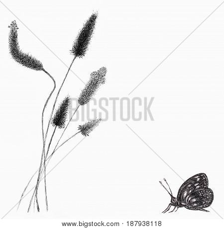 Card with drawing of field grass and butterfly over white paper