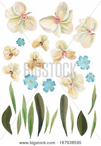 Watercolor painted collection. Excellent Watercolor Flowers Elements for invitation, wedding or greeting cards.