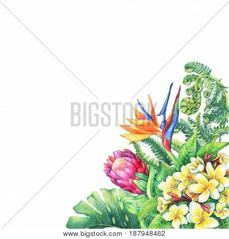 Floral card with branches purple Protea flowers, plumeria, strelitzia and tropical plants. Hand drawn watercolor painting on white background.