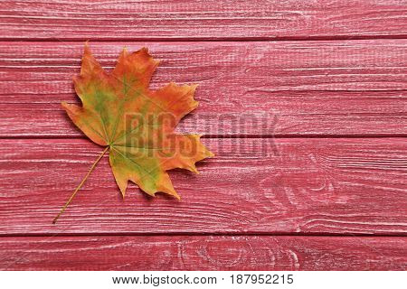 Autumn leaf on the red wooden table