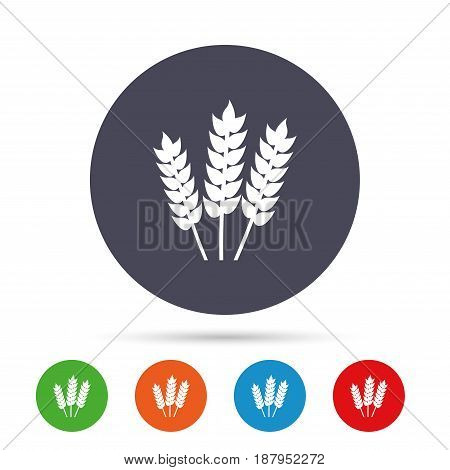 Agricultural sign icon. Gluten free or No gluten symbol. Round colourful buttons with flat icons. Vector