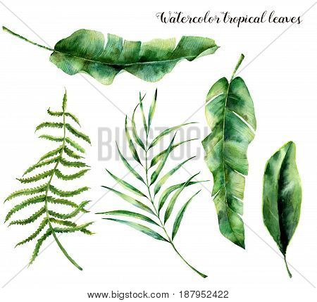 Watercolor set with tropical leaves. Hand painted palm branch, fern and leaf of magnolia. Tropic plant isolated on white background. Botanical illustration. For design, print or background.