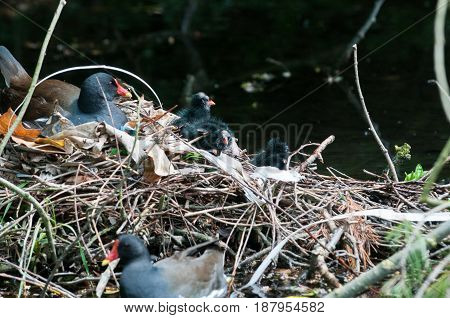 Mother And Baby Birds Nesting On A River Nest