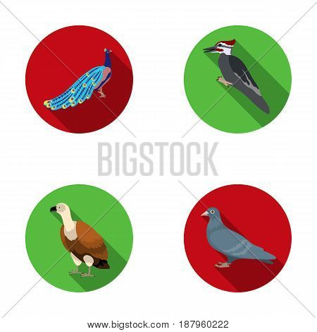Peacock, woodpecker and various species. Birds set collection icons in flat style vector symbol stock illustration .