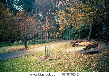 Empty Picnic Table In A Beautiful Autumn Garden Settings With Yellow And Orange Trees And Foliage.